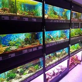 Teich und Aquaristik im Keller auf 200m2