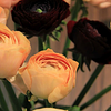 Blumen Steiger