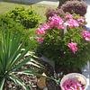 Moser Hauswartungen und Gartenunterhalt