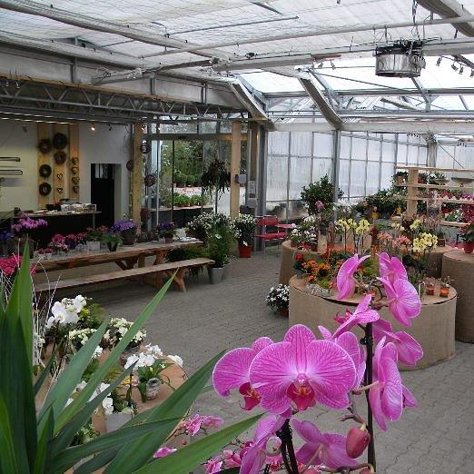 Täglich frische Blumen & Pflanzen
