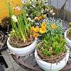 Kaffeeblüte, Deko, Blumen, Ossingen, Zürich, Weinland, Frauenfeld, Winterthur