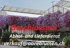 Aareblumen AG