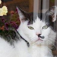 Katzenaufnahmestation Cat-Box
