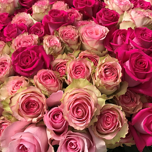 wunderschöne fairtrade- Rosen
