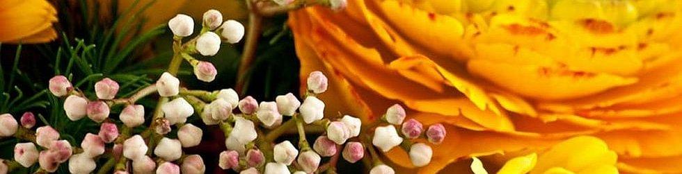GD Fleurs
