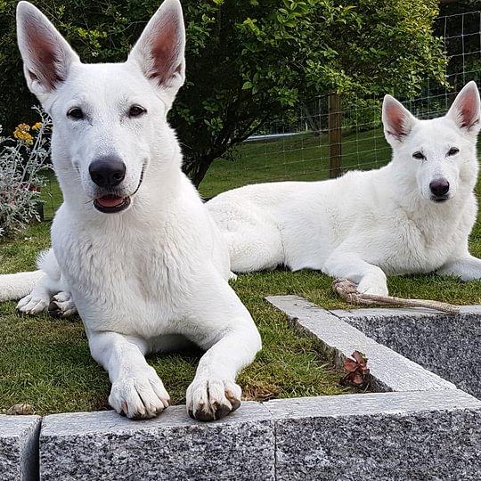 Hundeschule Bonny's Lodge