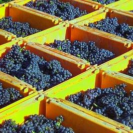 Brunner Weinmanufaktur