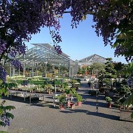 Daepp Gartenpflanzen