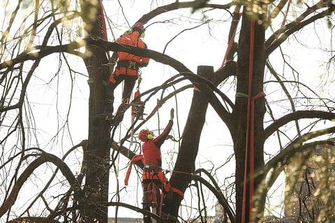 Taglio e cura alberi