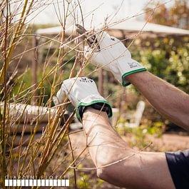 Giardiniere Lugano potature manutenzione giardini Giardini Fioriti