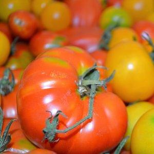 verschiedene alte Tomatensorten, www.saisonbox.ch