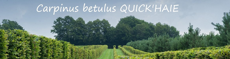 PLANTiDEAL, sourcing de plantes & conseils jardin