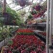 Morgenthaler Gärtnerei Gartenpflege Blumengeschäft