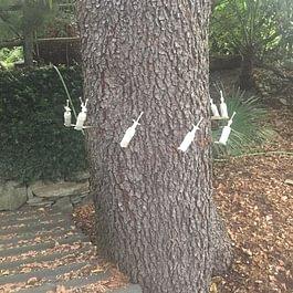 Endoterapia contro processionaria del pino