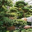 Pflege von Gartenbonsais