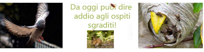 Eco Line Sagl
