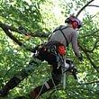 Taille de soins aux arbres