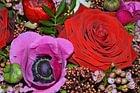 Blumenhaus Erni