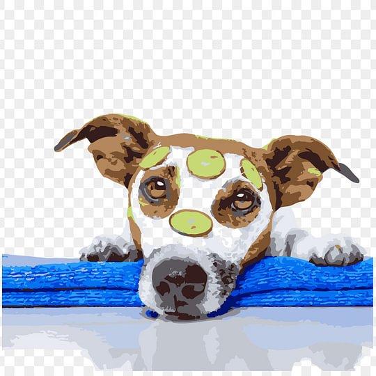Tierliebe ist in der pfotenoase marleen zu spüren - wohltuend und geborgen.