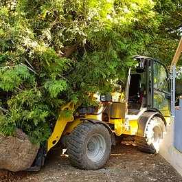 Bepflanzung von grösseren Bäume
