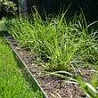 Gräserbepflanzung
