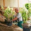 Pflanzenproduktion Umtopfen