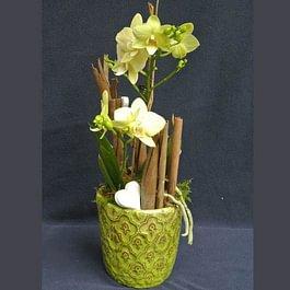 Blumenhaus Wiedikon