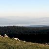 Vue sur le lac Léman et les Alpes