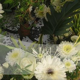 Blumenland Schweiz AG