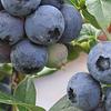 PAGANINI Frutta SA
