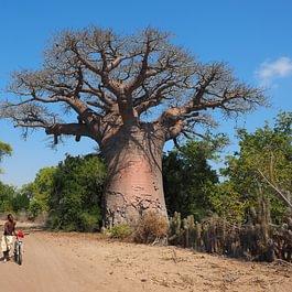 Natürlich kennen wie auch die Orte der Baobab