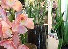 Floradiso AG