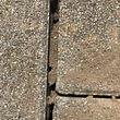 Ameisennester