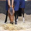 Spécialisé dans les compléments alimentaires pour chevaux