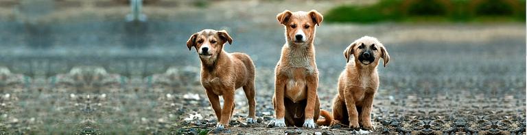 Hundesalon Apollo