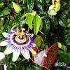 Fleurs@tmosphère