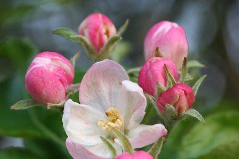 Floriterapia o Essenze Terapia