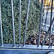 Geländer: Aus Stahl, lackiert mit Staketen-Optik.