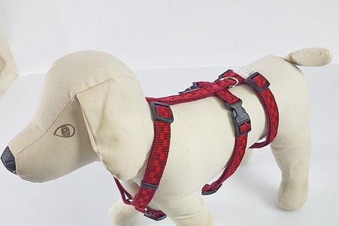 Hundespielzeug, Leinen, Halsband, Geschirr und Trainings Zubehör