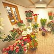 Jardinerie Fleuristerie Hämmerli SNC