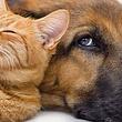 Bei uns ist Ihr Haustier gut aufgehoben