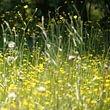 Allergie au pollen ou d'autres allergies du au contact d'un allergène