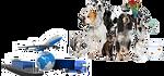 Import chiens, chats et autres animaux vivants