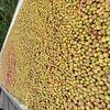 Lavage Pommes