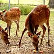 Gasthof zum Hirschen