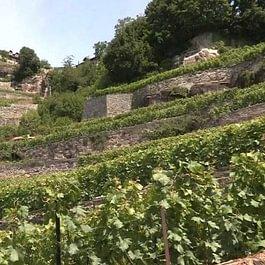 Cave des Rois - Villeneuve VD
