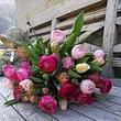 AUHOF Pflanzen Garten Blumen, Real Toni