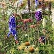 immer Blühendes bei uns im Laden-Gärtnerei Hochwald