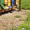 Honigbienen1