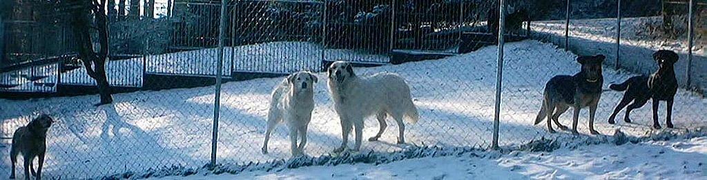 Hundepension Meissholz